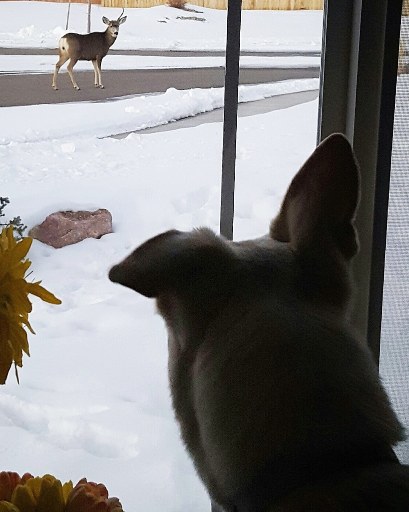 Oh, deer! by carrieoakey