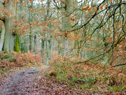 30th Jan 2017 - A walk in the woods...