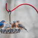 Flurries At The Feeder  by lesip