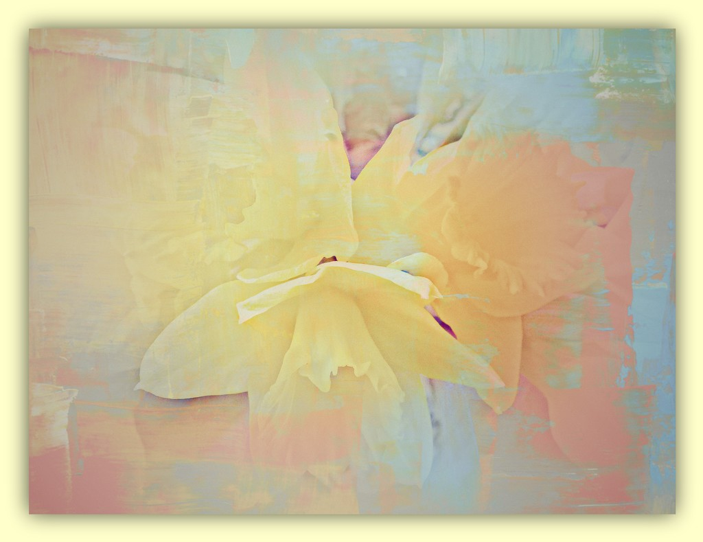 The Daffodils - Abstract  by beryl
