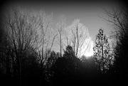 1st Feb 2017 - Frosty Trees