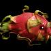 Dragonfish! by teiko