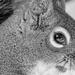 Squirrel selfie  by novab
