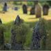Waimate Church Graveyard by dide
