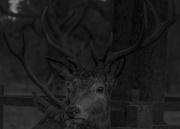 3rd Feb 2017 - Deer.