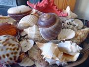 31st Jan 2017 - Seashells