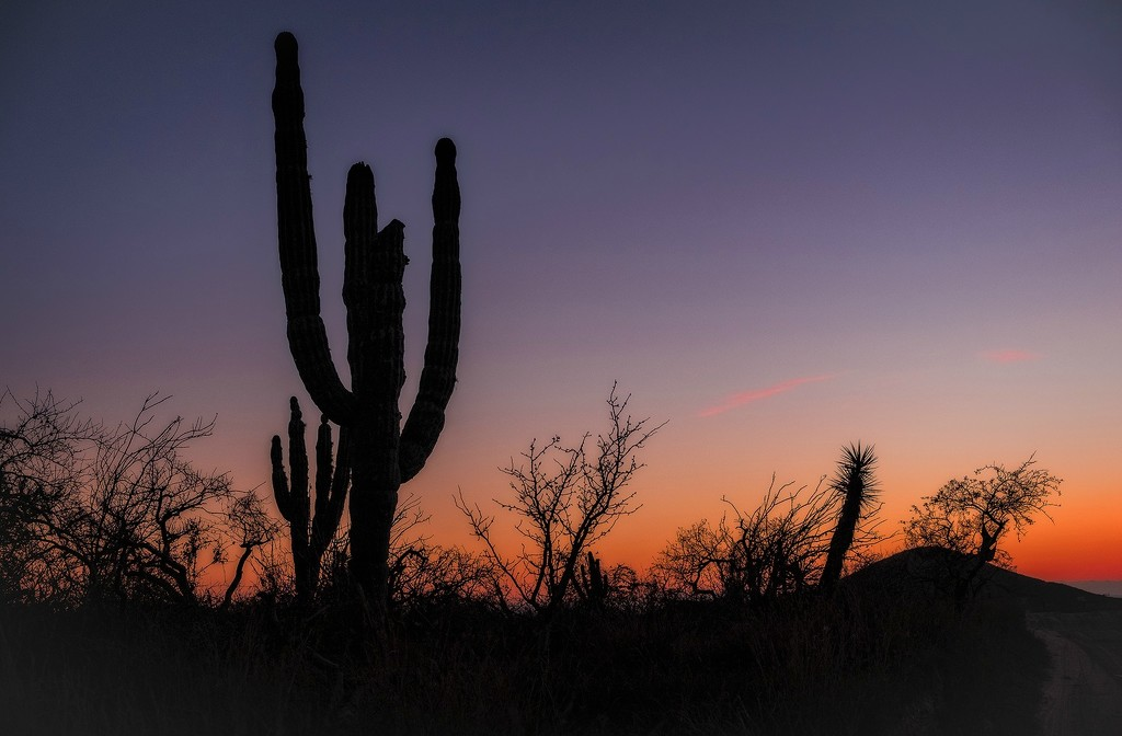 Saguarro Sunset 2 by jgpittenger