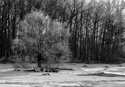 4th Feb 2017 - Frozen branches
