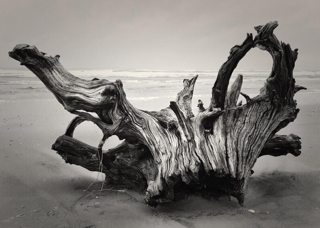 Driftwood by jgpittenger