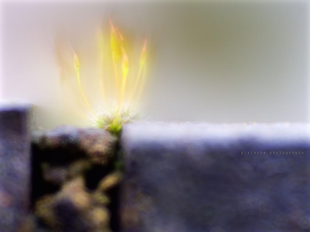 moss on fire by pistache