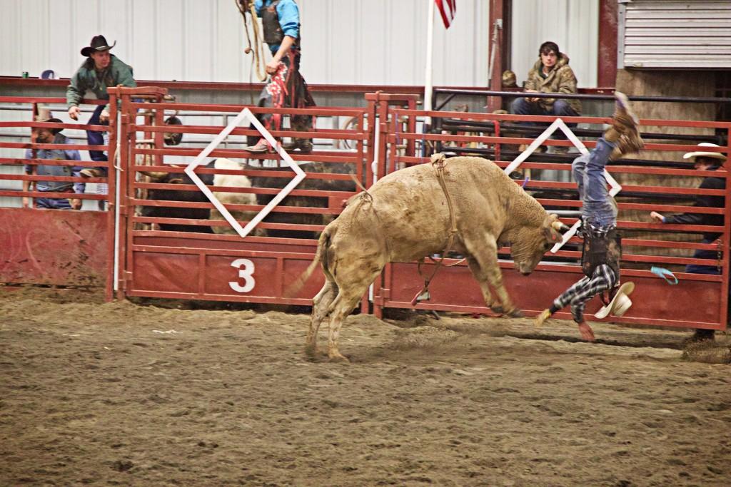 Bull Rider-LHG_0861  by rontu