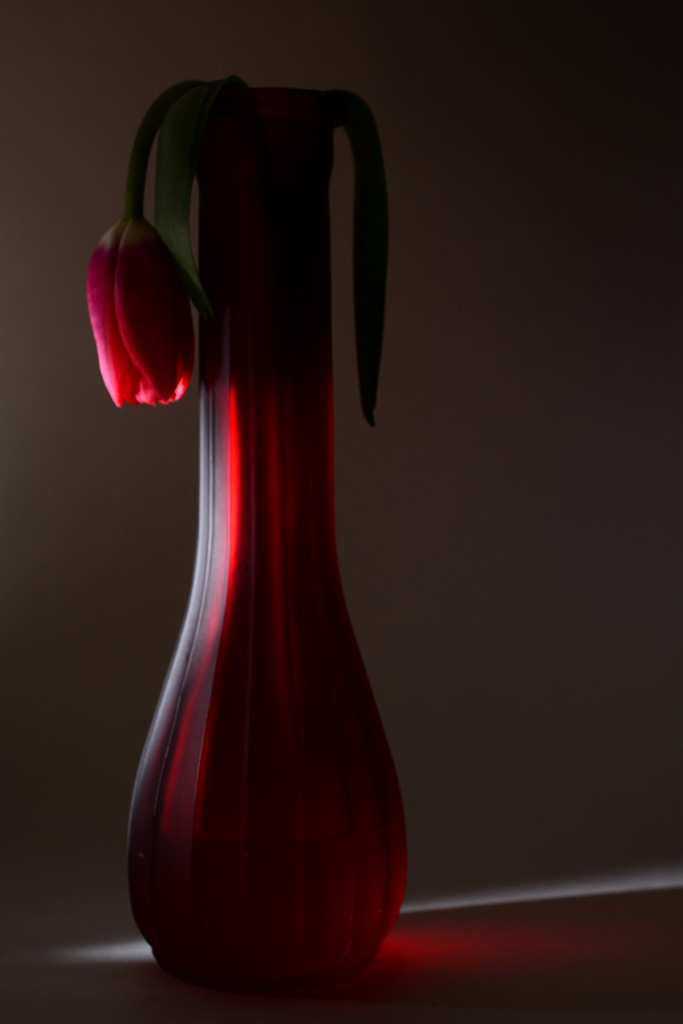 Red and wilting by jayberg