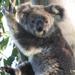 strong arms by koalagardens