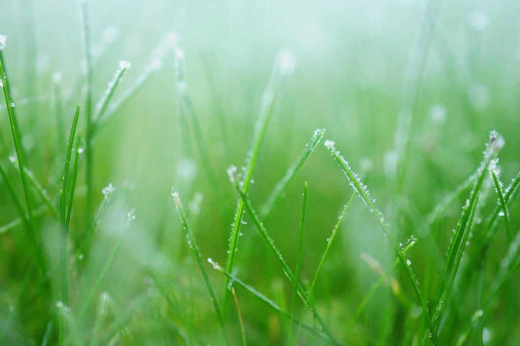 Green Haze by naomi