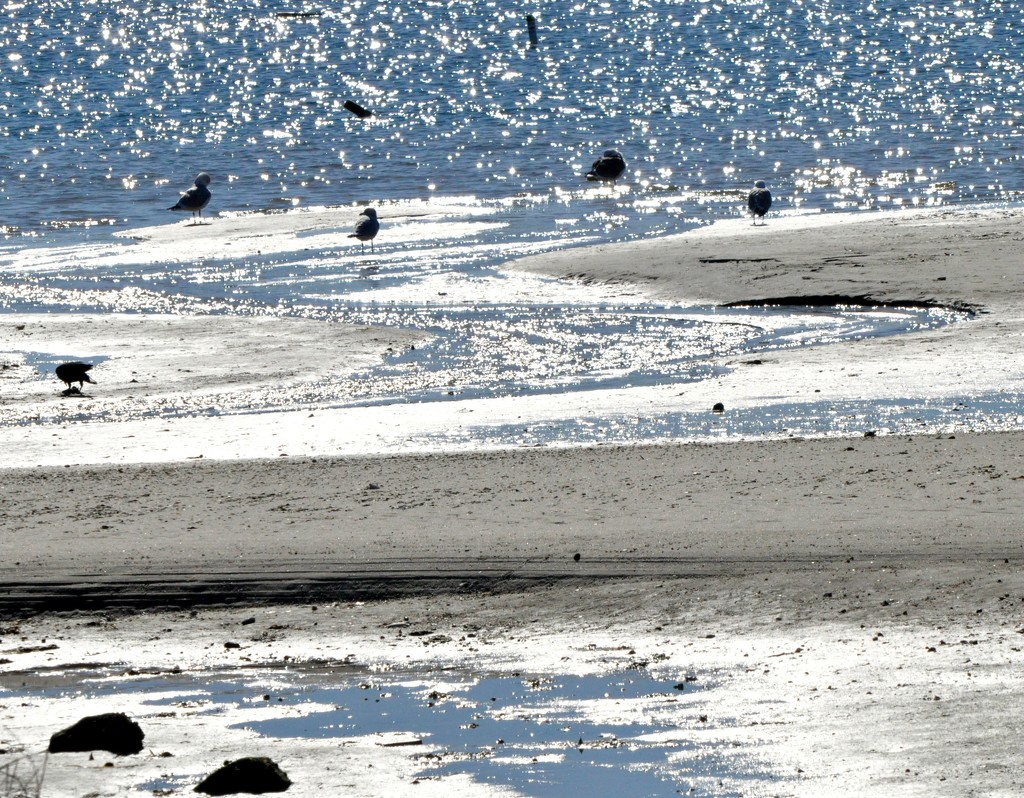 Low tide on a sunny day. by sailingmusic