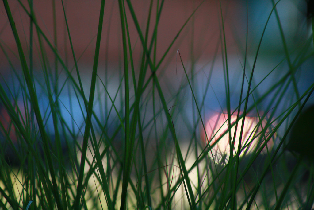 Peeking through the grass by mittens