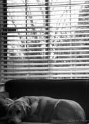 7th Feb 2017 - Dog Nap