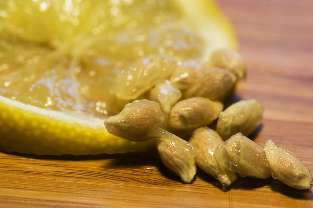Lemon Pips  by bizziebeeme