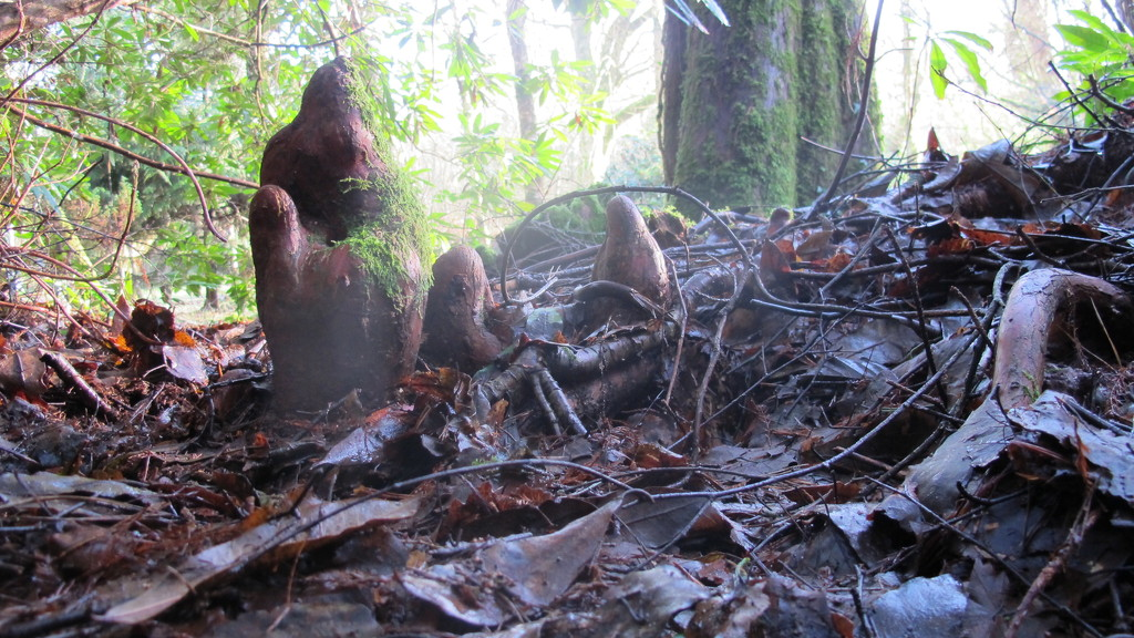 Woodland Trolls or tree roots? by s4sayer