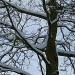 Still winter by pyrrhula