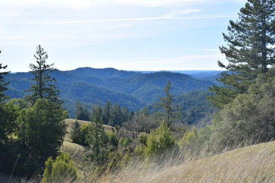 Redwood valley by bruni