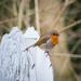 Stourhead Robin by dorsethelen