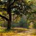 Golden light of afternoon by congaree