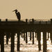 Blue Heron Silhouette on the Pier! by rickster549