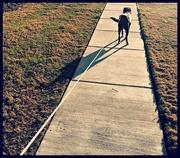 9th Feb 2017 - Afternoon Walk