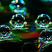 Drops on CD by elisasaeter