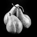 lightbox pears by aecasey