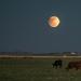 Penumbral Eclipse by ckwiseman