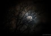 10th Feb 2017 - Branchy Moonlight
