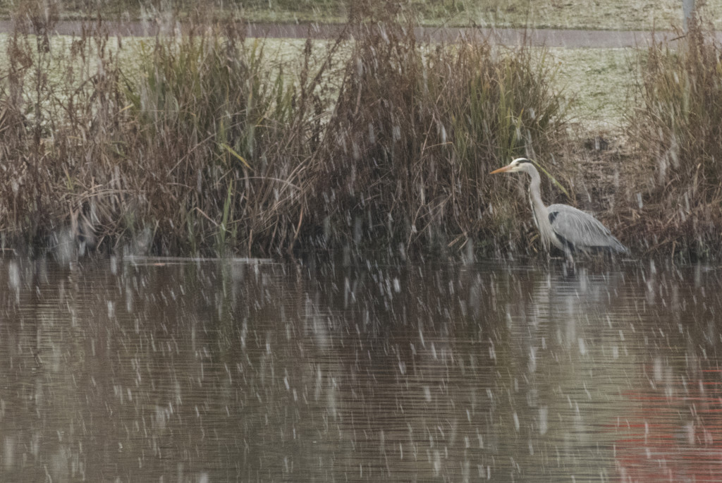 Snowy Outlook for the Heron by bizziebeeme