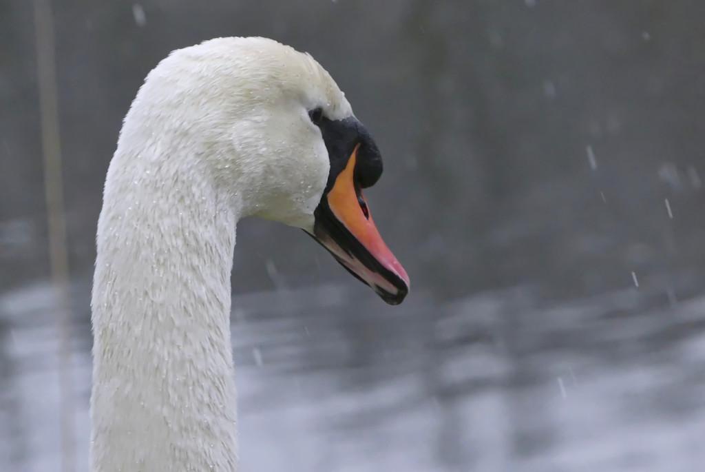 Snowy Outlook! by bizziebeeme