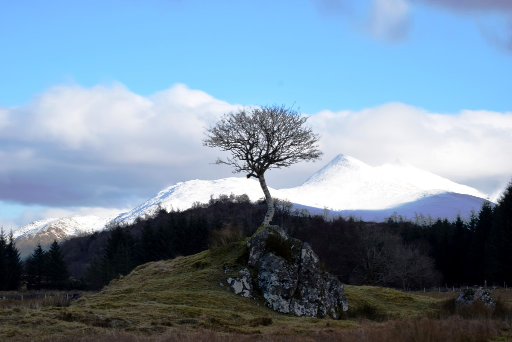 tree and hill by christophercox