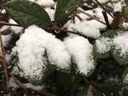 25th Feb 2020 - Love snow!