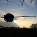 Backlit Fence I