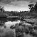 PLAY February - Fuji 18mm f/2: Paimpont Lake South by vignouse