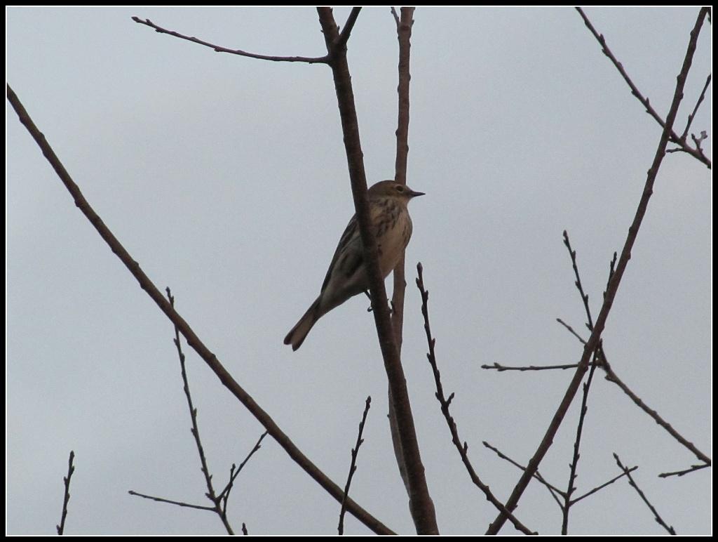 Still Life- Bird in Tree by allie912