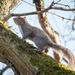 Sixth Squirrel
