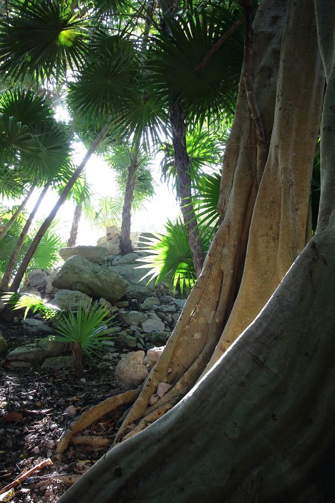 mystery jungle by blueberry1222