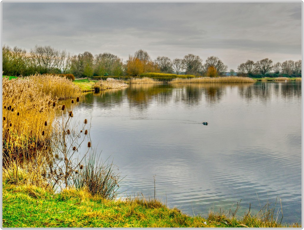 Stanwick Lakes by carolmw