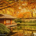Autumn at Japanese Gardens  by lynne5477