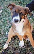 16th Feb 2017 - My Parent's New Precious Pup: Meet Bella!