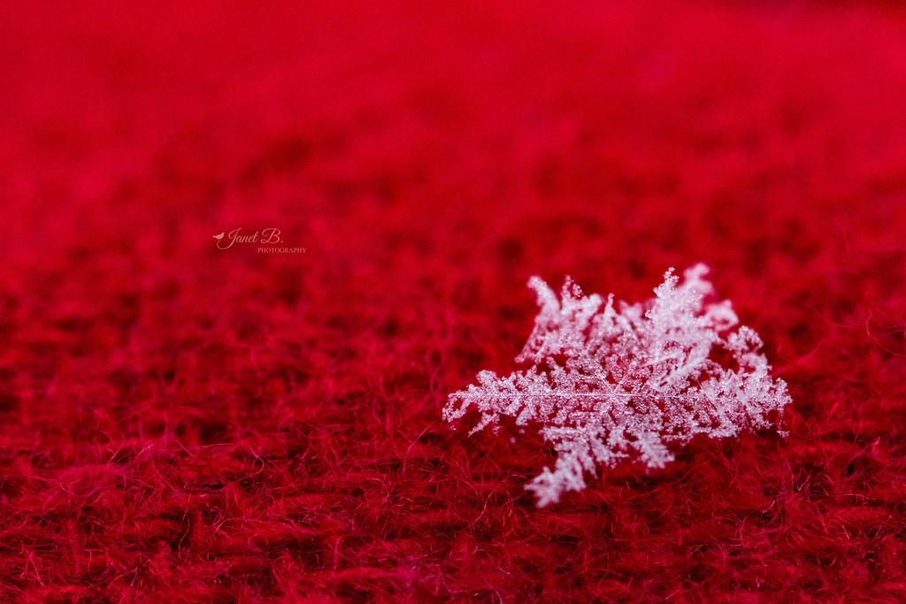 Snowflake by janetb