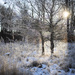 Frosty morning in our forest by lily