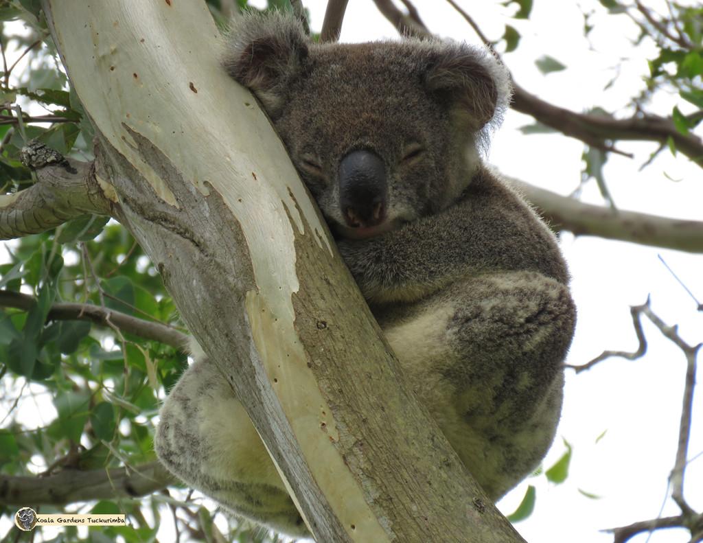 asymmetrical beauty by koalagardens
