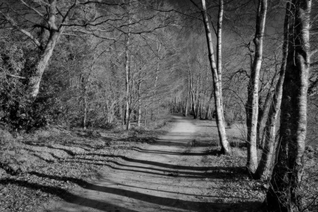 Lakeside Path by vignouse