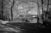 18th Feb 2017 - PLAY February - Fuji 18mm f/2: Sitting or Strolling...